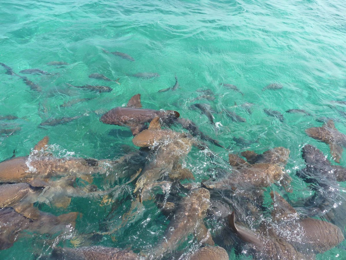 San Pedro: la Isla Bonita