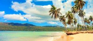 beach, paradise, palm trees