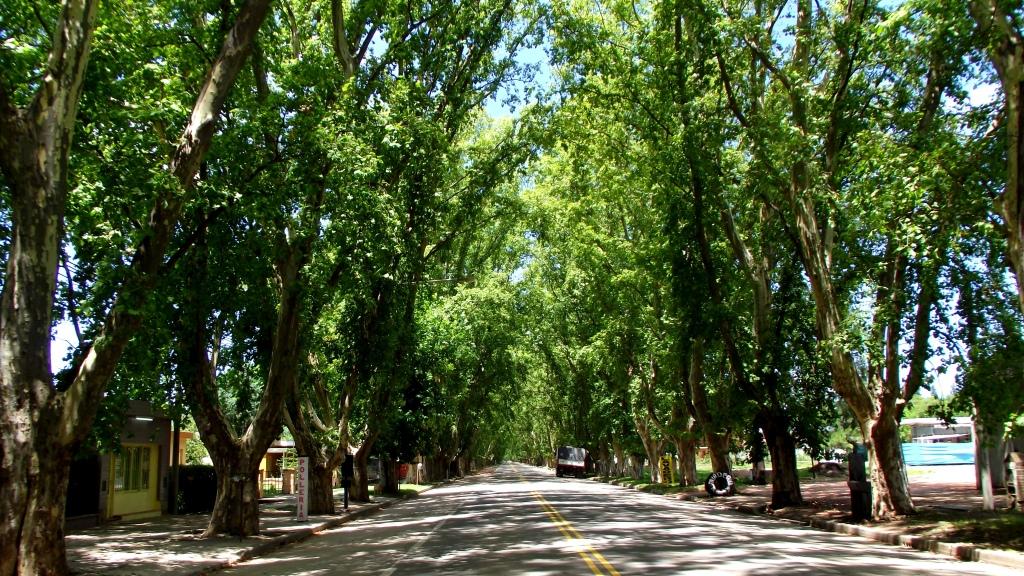 Bodega La Caroyense Colonia Caroya